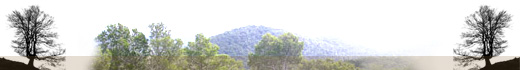 Servei de Sanitat Forestal - Capçalera Baixa 03.
